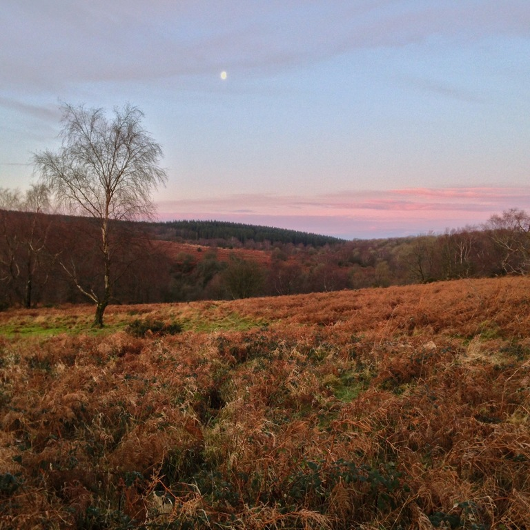 Black down hills at sunset a moments walk from our door