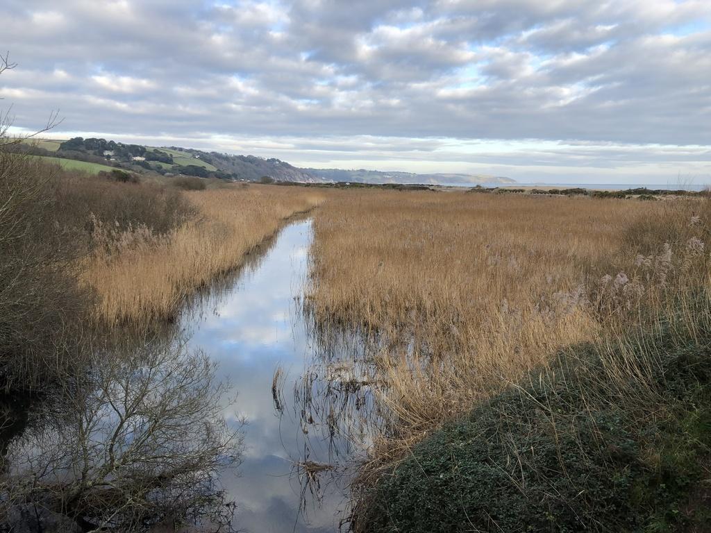 Slapton nature reserve 20 minutes.