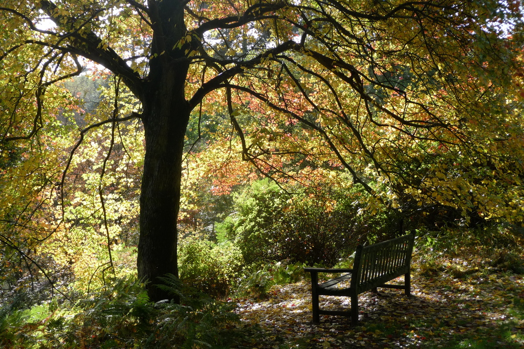 Local beauty spot Winkworth Arboretum in early October.