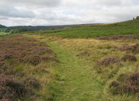 North York Moors for picnics and walks in the wild.