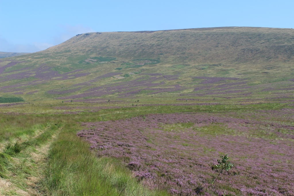 August sees whole stretches of the nearby moors swathed in purple