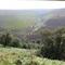 Local moorland, off the Derwent Valley