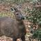 Deer in the garden at Badgers Hollow