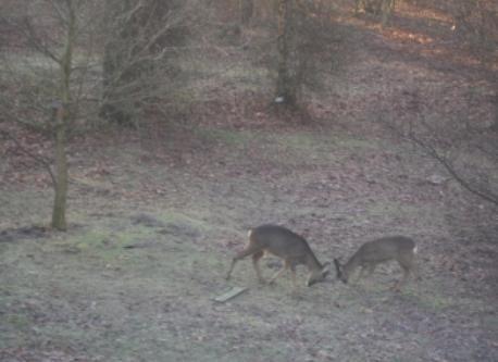 Deer in the garden of Badgers Hollow