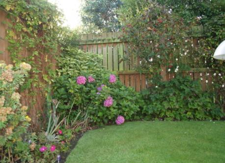 The back garden in autumn