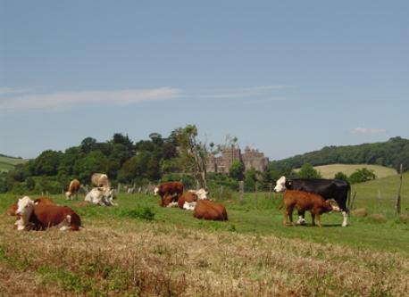 Local countryside and inhabitants!