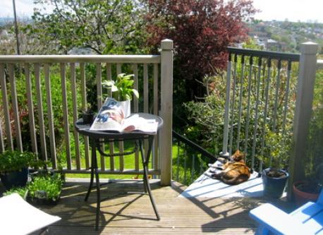 Balcony (plus visiting cat)