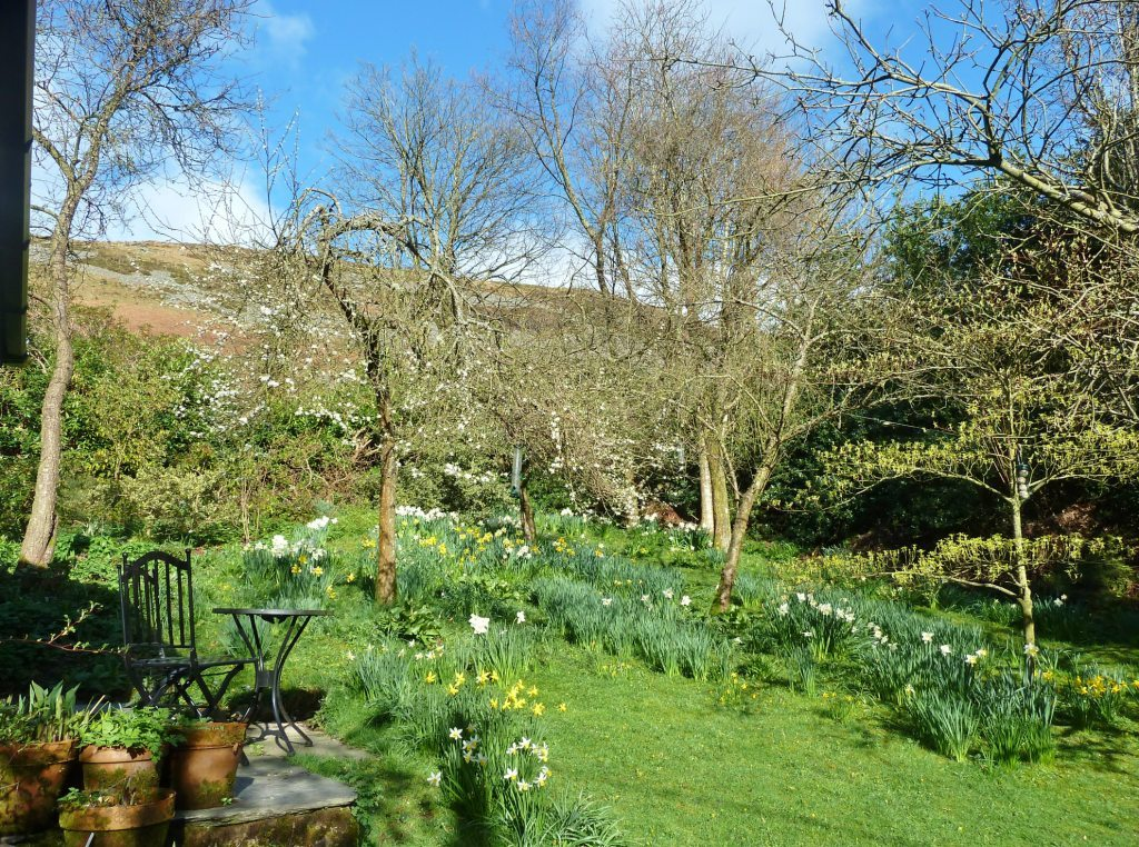 The garden in April