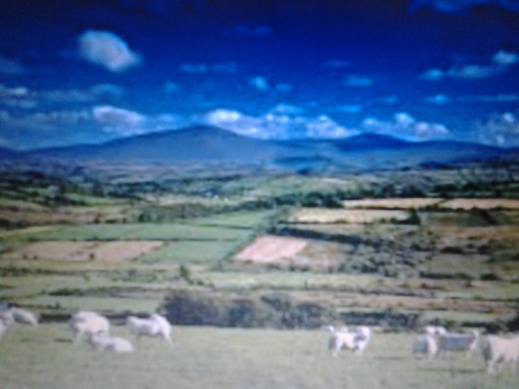 rural tyrone