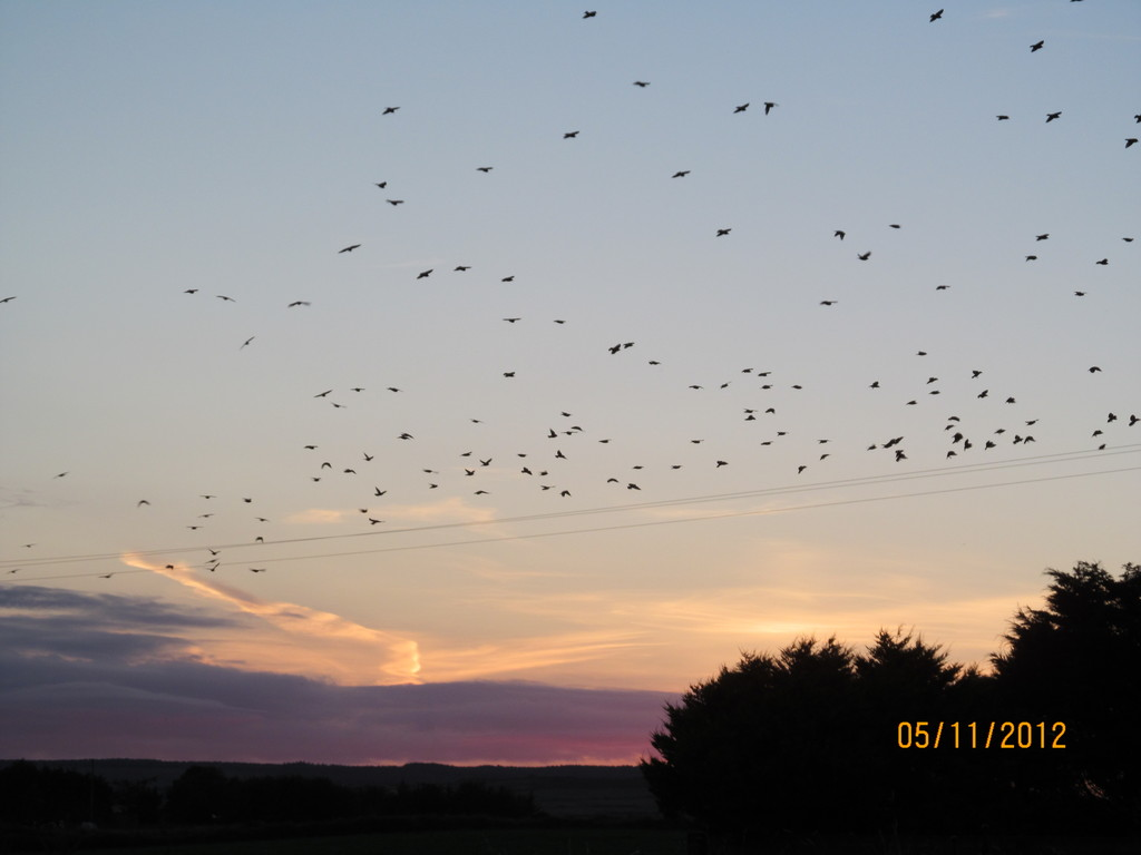 Birds flight takes place most summer evenings