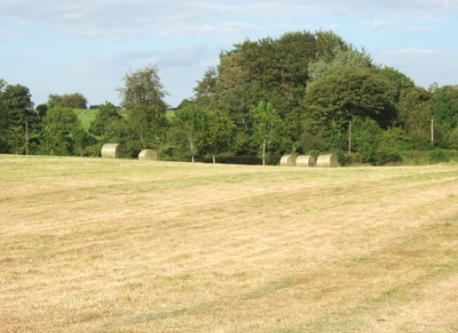 Our field in July after the silage was cut