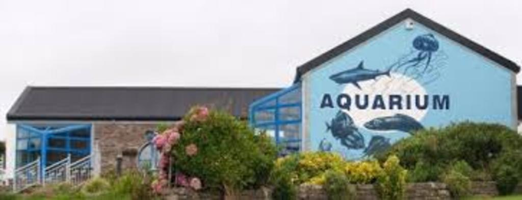 Dingle Aquarium