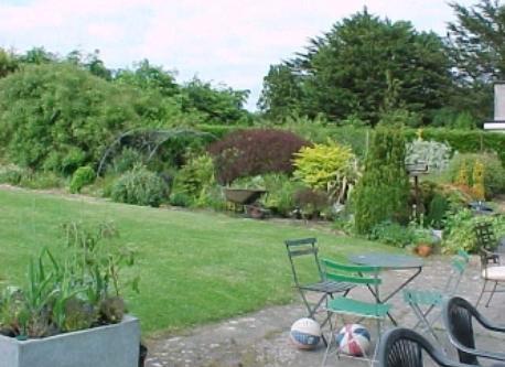 Back garden at home in Kildare.