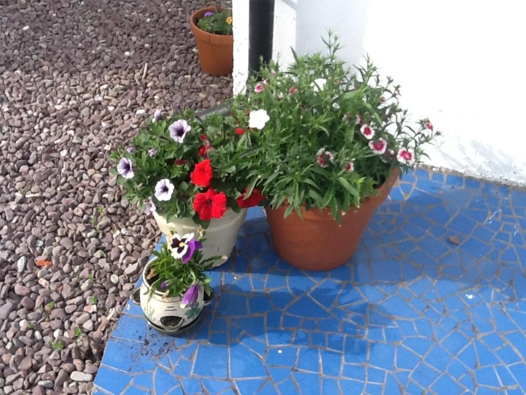 flowers on mosaic patio