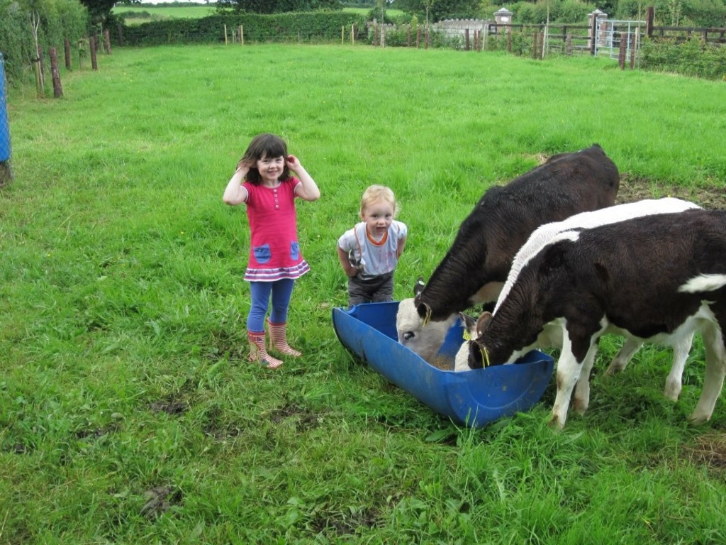 Cal and his cousin feeding calves