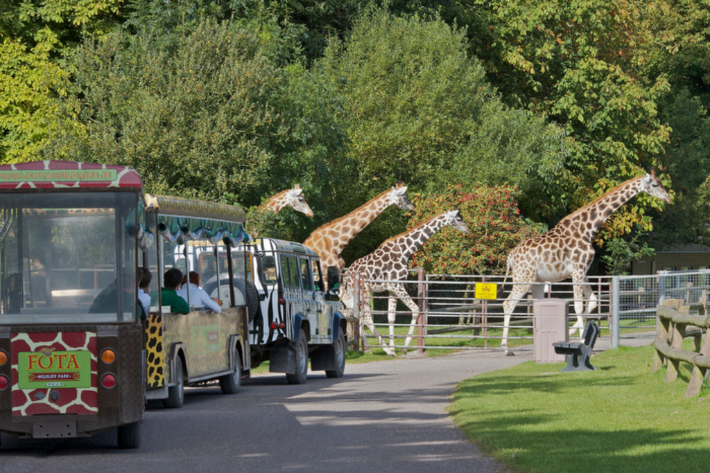 Fota wildlife park-15 minute drive