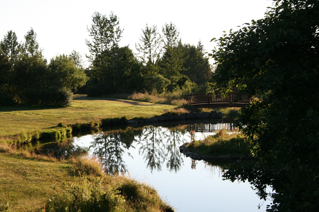 The local pond.