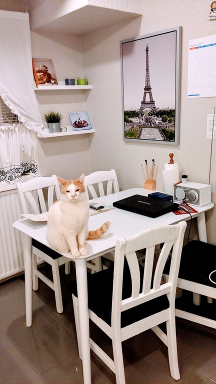 In my kitchen - and my male cat, Elias