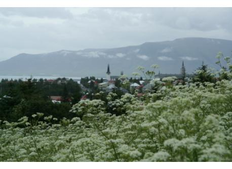 View from Öskjuhlíd, a green spot within the city, over our neighbourhood