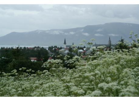 View from Öskjuhlíd, a green spot within the city, over our neighbourhood