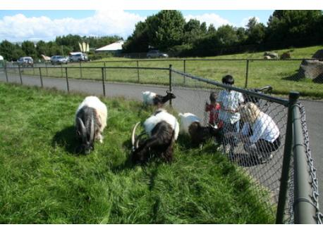 Reykjavik´s petting zoo, with farm animals and playground