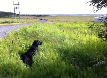 Our dog Tinni