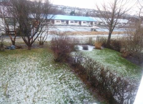 The garden in the wintertime