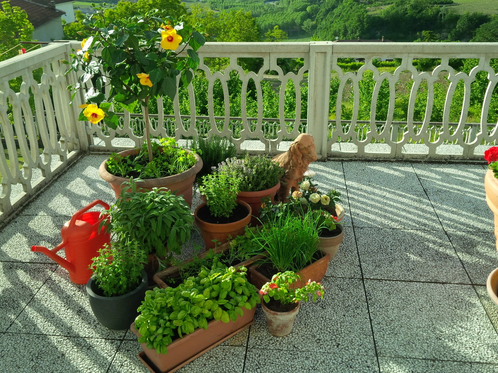 Parsley, sage, rosemary and thyme and of course basil.Just outside the kitchen door on the terrazzo