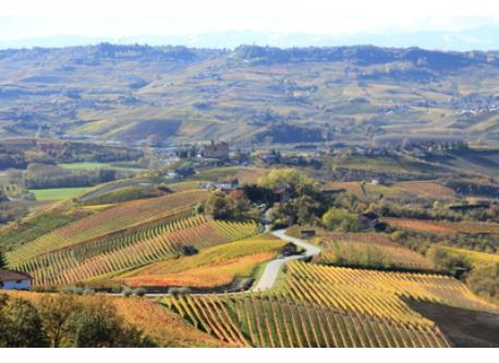 Langhe wine area, Alba