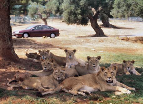 Zoosafari amusement park 40 km