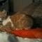 Our cat Ettore
