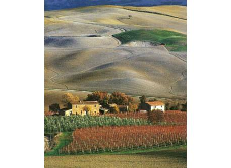 View of le Crete Senesi