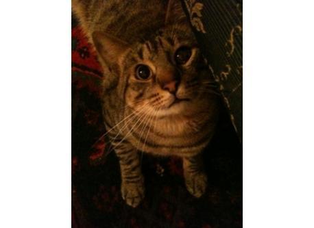 our cat Mizzi