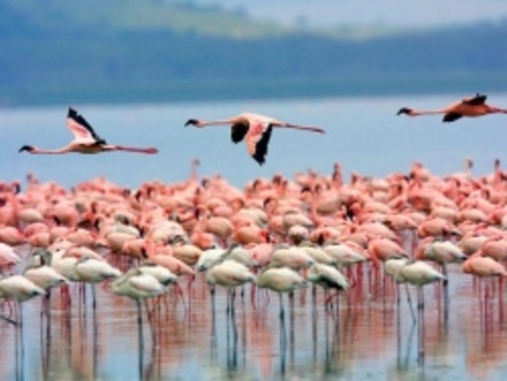 Flamingos inside Molentargius-Saline Park