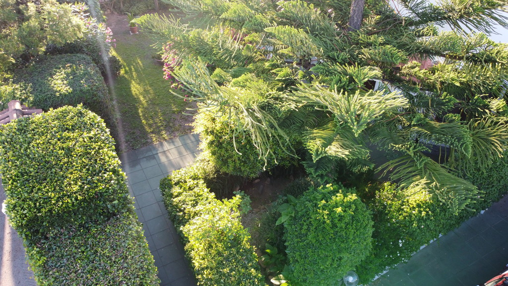 The garden, seen from above.