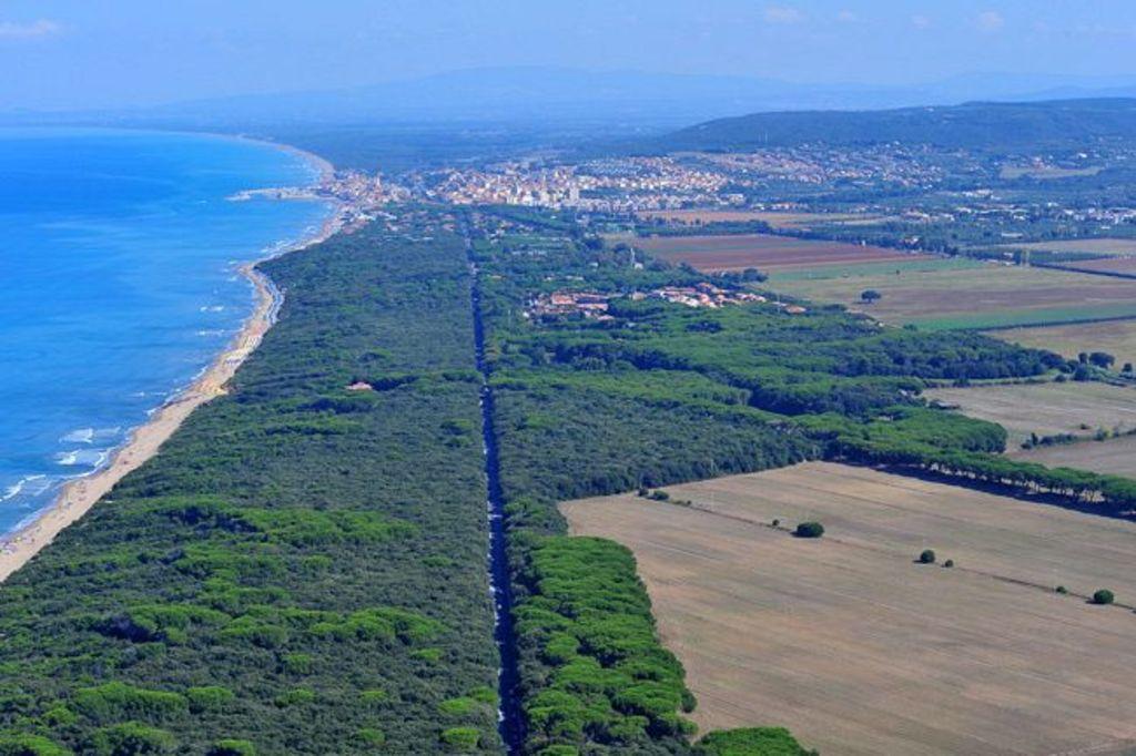 Costal pinewood 15 Km south Castiglioncello (Marina di Cecina)