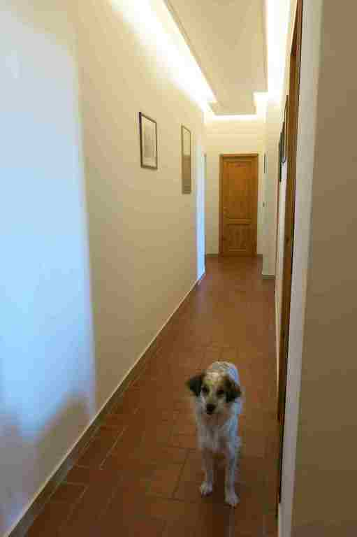 corridor (with our dog which will be kept in a pet hotel)