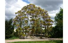 pavilion in english garden park, 5 min. to walk