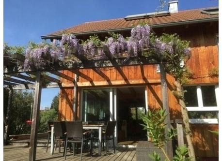terrace from back garden