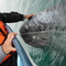 Pet a wild grey whale calf, if you are lucky!