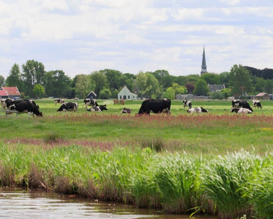 Waterland meadow