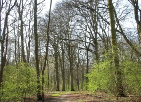 nearby public woods
