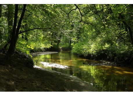 """""""Beek en Delle"""", wood with water mill"""