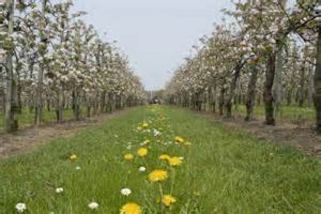 The fruit trees in the environment