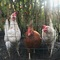 Get fresh eggs every morning from the chickens in the garden