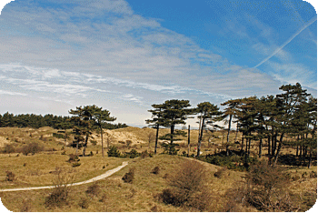 Dunes half an houre from Amsterdam