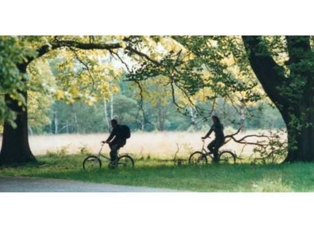 Cycling near Gouda