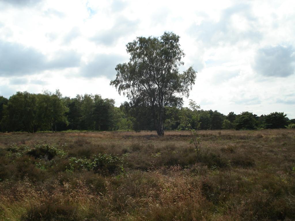 Nature (nearby Harderwijk)