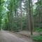 Forest (nearby Harderwijk)