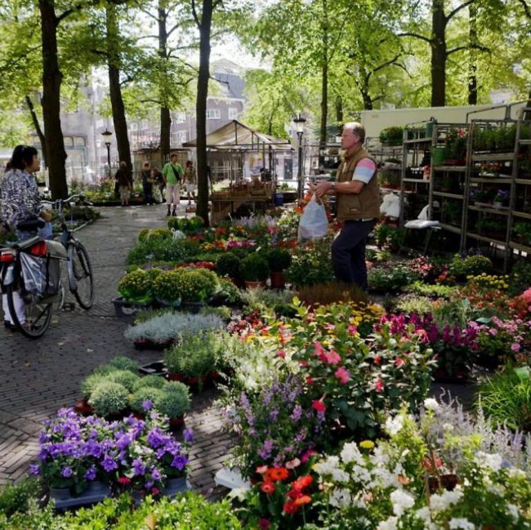 Visit the bloemenmarkt (flowermarket)in Utrecht on a Saturday